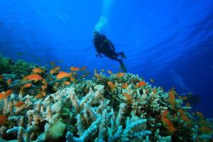 South Goa Snorkelling - Image Courtesy Source